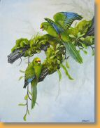 yellow fronted kakariki by Janet Marshall acrylic on canvas 45 x 40cms.jpg